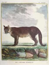 Buffon Large Edition Original Colored Print Cougar Female - 1784