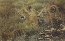 Alan Hunt - African Gold Mounted New Sale 50% Off RRP