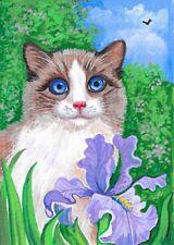 Aceo Print Of Painting Ryta Ragdoll Cat Iris Flower Garden Landscape Art Summer