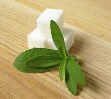 50 semillas Stevia rebaudiana, edulcorante natural  S