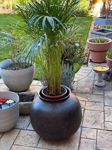 Antique Large Indian Riveted Steel Cooking Water Pot Garden Planter Indoor Huge