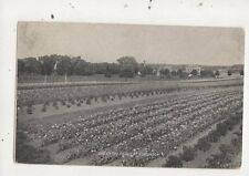 Field At Fordhook Pa USA 1908 Atlee Burpee Seed Grower Advert Postcard 936a