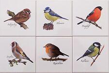 15x15 Küchenfliesen mit Vogelmotiven Blaumeise Feldsperling Kohlmeise Stieglitz