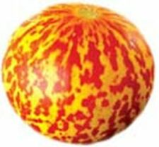 Tigger Melon Sweet Heirloom, 15 Seeds
