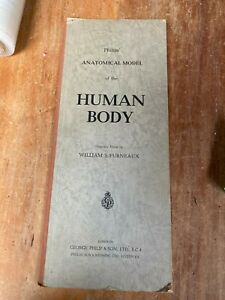 Vintage Mid Century 1958 Philips Anatomical Model of the Human Body Book 3D