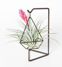 tillandsia houston,plant gift,with diamond metal hanger  as one set,US free ship