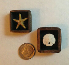 OOAK Dollhouse Sand Dollar and Starfish in Teakwood Shadow Boxes 1:12