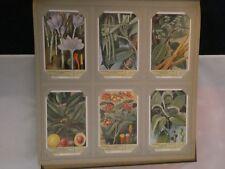 Liebig Chromo - Natuurkennis van enkele specerijen - 1953