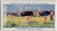 Ostrich Farming In South Africa 1920s Trade Ad Card
