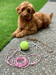 MYK9 Show Leash / Puppy Lead / Dog or Cat  / Custom Length / Hand Made in Aus