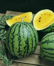 10+ Yellow Baby Doll Watermelon Seeds, Very Sweet Vegetable Garden