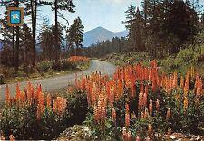 BT6587 Lumiere et couleurs de la montagne France route dforestiere        France