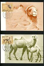 Postal History China PRC FDC #2433-2434 SET OF 2 Maximum card animals camel 1993