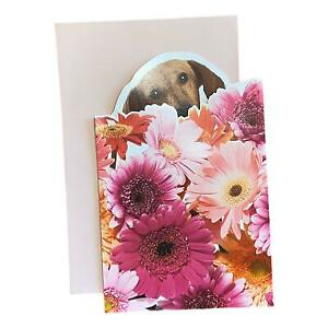 Mother's Day Greeting Card - Colorful Daisies with Dachshund Dog Hiding