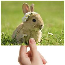 "Baby Bunny Rabbit Flowers - Small Photograph 6"" x 4"" Art Print Photo Gift #15575"