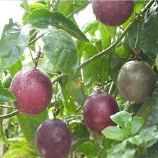 40Pcs Passion Fruit Passion Fruit Seeds Sweet Passiflora Edulis Plant Seeds Set