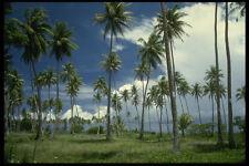 469006 Coconut Grove Bora Bora French Polynesia A4 Photo Print
