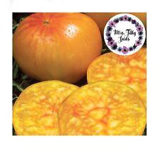 Pineapple Ananastomate Tomatensamen 10 Samen Tomate lecker selten robust bunt