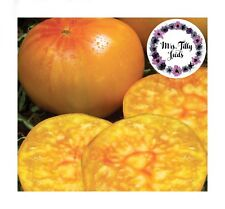 Pineapple Ananas Tomate Tomates Graines 10 Graines Tomate délicieux rarement robuste coloré