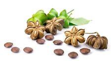10 Graines Sacha Inchi , Plukenetia volubilis , Mountain peanut seeds