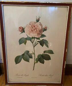 Vintage 1950s Original Framed Redoute Rosa alba Regalis Print Shabby Chic Lisboa