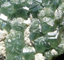 Very rare: Andradite var. DEMANTOID - Sferlùn asbestos mine, Lanzada, Italy!!!