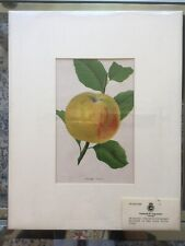 RARE 1900 Botanical Fruit Apple Hand Painted Chromolithograph Art Vintage