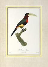Jacques barraband laracari Azara póster son impresiones artísticas imagen 54x39cm-sin gastos de envío