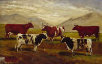 "high quality oil painting handpainted on canvas""cattle"""
