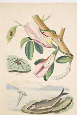 Gravure anc XIX° Histoire Naturelle Clio-Clitore-Cloporte-Clubione-Clupe-Clythre
