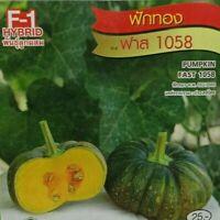 15 Seeds.PUMPKIN FAST 1058.Thai Vegetable.Skin Smooth.Home.CHIA TAI Quality Seed
