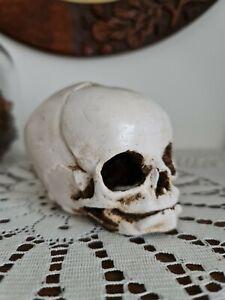 FOETAL SKULL Halloween Decoration Cast Gothic Decor Macabre Mourning