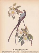 "1942 Vintage AUDUBON BIRDS #168 ""FORK TAILED FLYCATCHER"" Color Art Plate Litho"