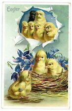 Easter Greetings-CHICKS IN NEST-BLACK CHICK-Raphael Tuck Embossed Postcard 700