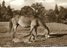 """VINTAGE SEPIA POSTCARD: """"THE PONIES IN THE NEW FOREST"""" pub: Thunder & Clayden"""