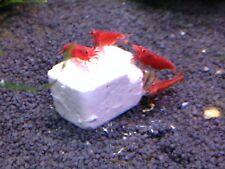 Cherry Shrimp CALCIUM MINERAL BLOCKS (Trial Pack) by Aqualibra UK