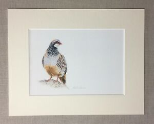 Game Bird Fine Art Giclee Print mounted ready to frame Partridge Snipe
