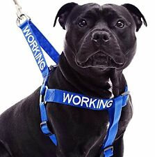 Dog Strap Harness Nylon WORKING Blue Non Pull Awareness Alert Strong Color Coded
