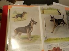 PAIR of Edwin Megargee German Shepherd bookplates 1958 National Geographic Mag