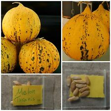 Greek Traditional Sweet Melon ''Thrakis'' ~10 Top Quality Seeds - Extra Rare!
