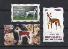 Rare Dog Art Photo Postage Stamp Collection Ibizan Hound 3 Different Body Mnh
