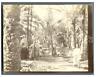 Algérie, Scène animée sous les palmiers  Vintage citrate print.  Tirage citrat