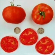 Delicious - Organic Heirloom Tomato Seeds - World Record Holder - 40 Seeds