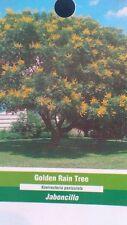 4'-5' Golden Rain Tree Live Flowering Shade Trees Healthy Home Landscape Plants