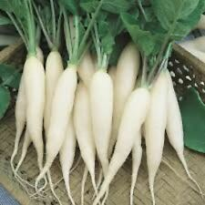 Radish - White Icicle Seeds - garden vegetable Seeds