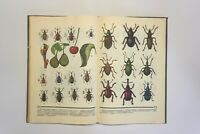 Botanical Book, Vintage Illustrated, painted plants, beetles, and butterflies