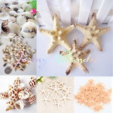 Wholesale 50-200g Natural SEA SHELL Starfish Craft DIY Decorate Gift Kit Wedding
