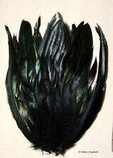 25 Black Rooster Tail Feathers 8-10