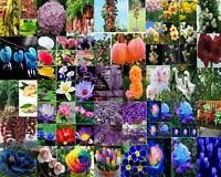 Various Flower Seeds Ideal Garden Potted Seed Rare Fruit Plant Ornamental Decor