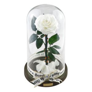 la floraison edle jahrelang haltbare Rose im Glas mit ewiger Rose